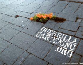 Nasce il gruppo 'Guerrilla gardening Alessandria' e mette a segno la prima azione: piantine nei buchi in via Bergamo