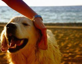 Una gita 'bestiale' nelle spiagge dog friendly della Liguria