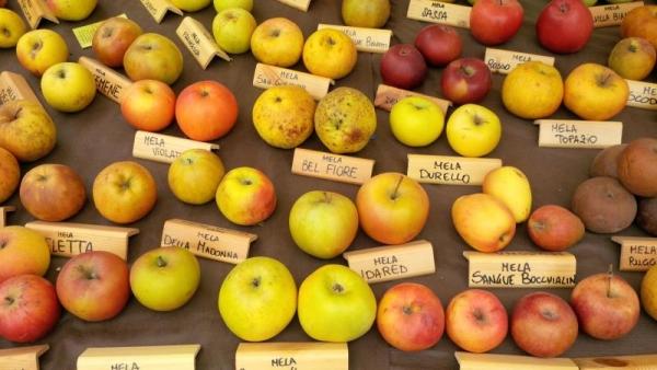 "A Cartosio l'autunno è ""fruttuoso"""