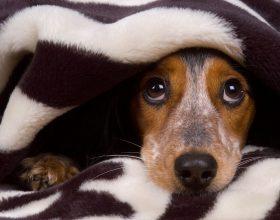 Come difendere gli animali domestici dai botti di fine anno