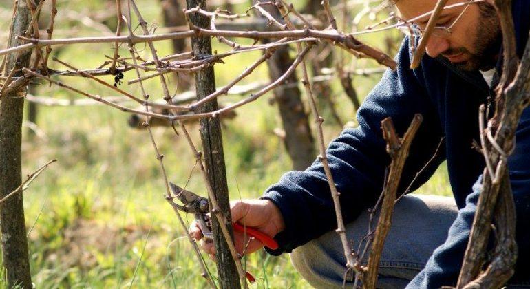 """""""Quatar Pass per Timurass""""un'intera giornata dedicata al vino dei Colli Tortonesi"""