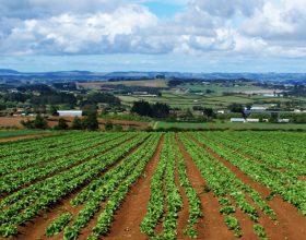 Coldiretti: sempre più Under 35 scelgono l'agricoltura per il loro futuro
