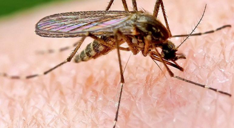 """Sulle zanzare scoppia un'altra polemica, minoranza attacca: """"Parole discordanti di Giunta e Locci"""""""