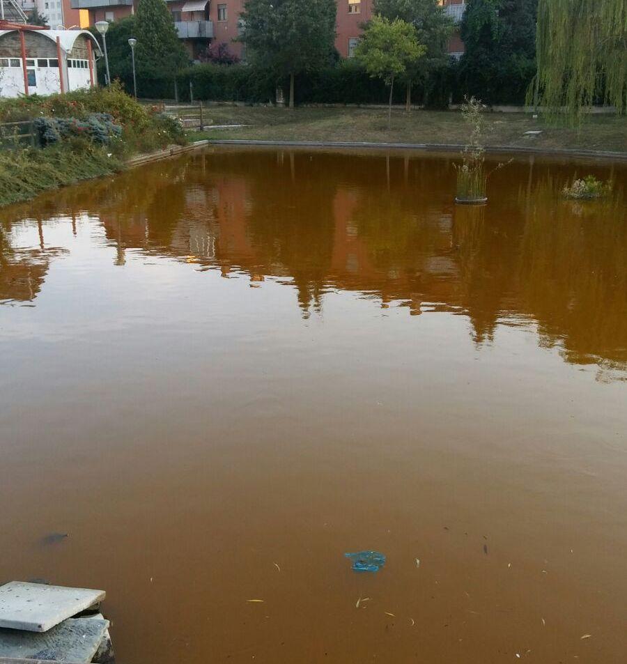 Ore contate per l acqua marrone al laghetto del quartiere for Pulizia fondo laghetto