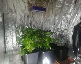 Coltivava marijuana in casa. Scoperto dagli agenti delle Volanti