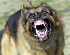 Cani azzannano a morte cagnolino a spasso con la padrona a Casalbagliano
