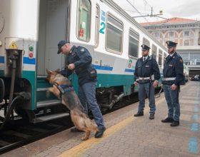 Fiuto cane poliziotto aiuta Polfer a scovare 40 grammi marijuana