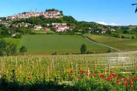 Immagine Camminare il Monferrato torna questa domenica a Rosignano