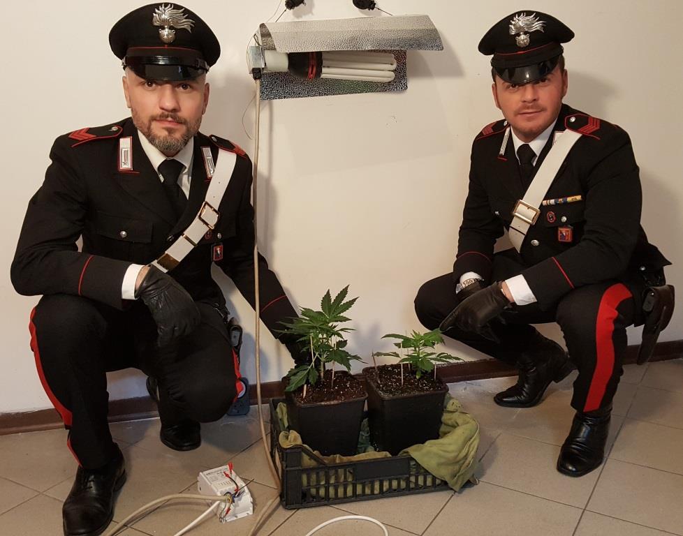 Coltivava piante di marijuana a insaputa del proprietario - Obblighi del proprietario di casa ...