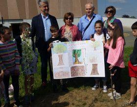 Nasce il bosco della famiglia rotariana: piantati i primi 7 alberi