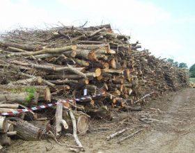 Più di 8 mila quintali di tronchi tagliati senza permesso: due denunce