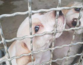 Al canile di Acqui 33 cani attendono una nuova famiglia