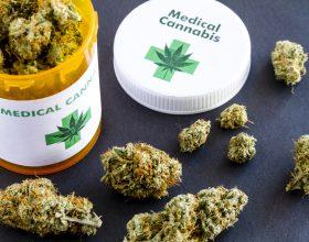 Cannabis terapeutica a Occimiano: 15 mila metri quadrati di produzione