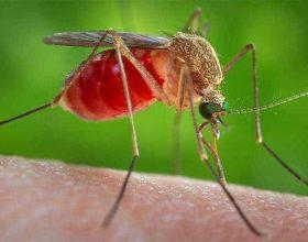 """Ad Alessandria zanzare positive al West Nile Virus, ecco le zone da evitare. Comune: """"No allarmismi"""""""