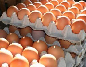 Nas di Alessandria sequestrano 300 mila uova con etichette contraffatte