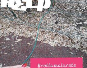 Petizione giardini viale Oliva a Valenza