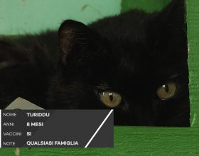 C'è posto per te: troviamo una famiglia a Turiddu