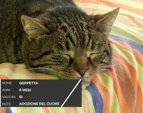 C'è posto per te: al gattile Panciallegra vi aspetta Geppetta