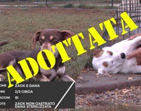 C'è posto per te: Zack e Dana aspettano ancora una nuova famiglia