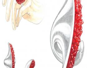 Primo premio sezione disegni - Nuzzi Stefania