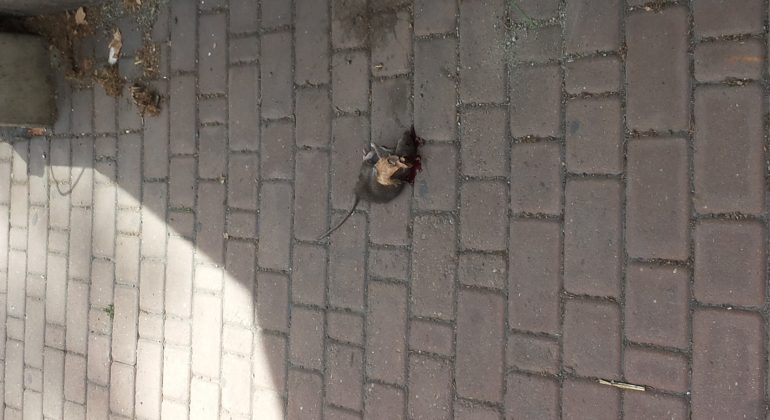 Topo morto Alessandria