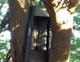 Stampante su albero