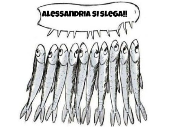 sardine alessandrine