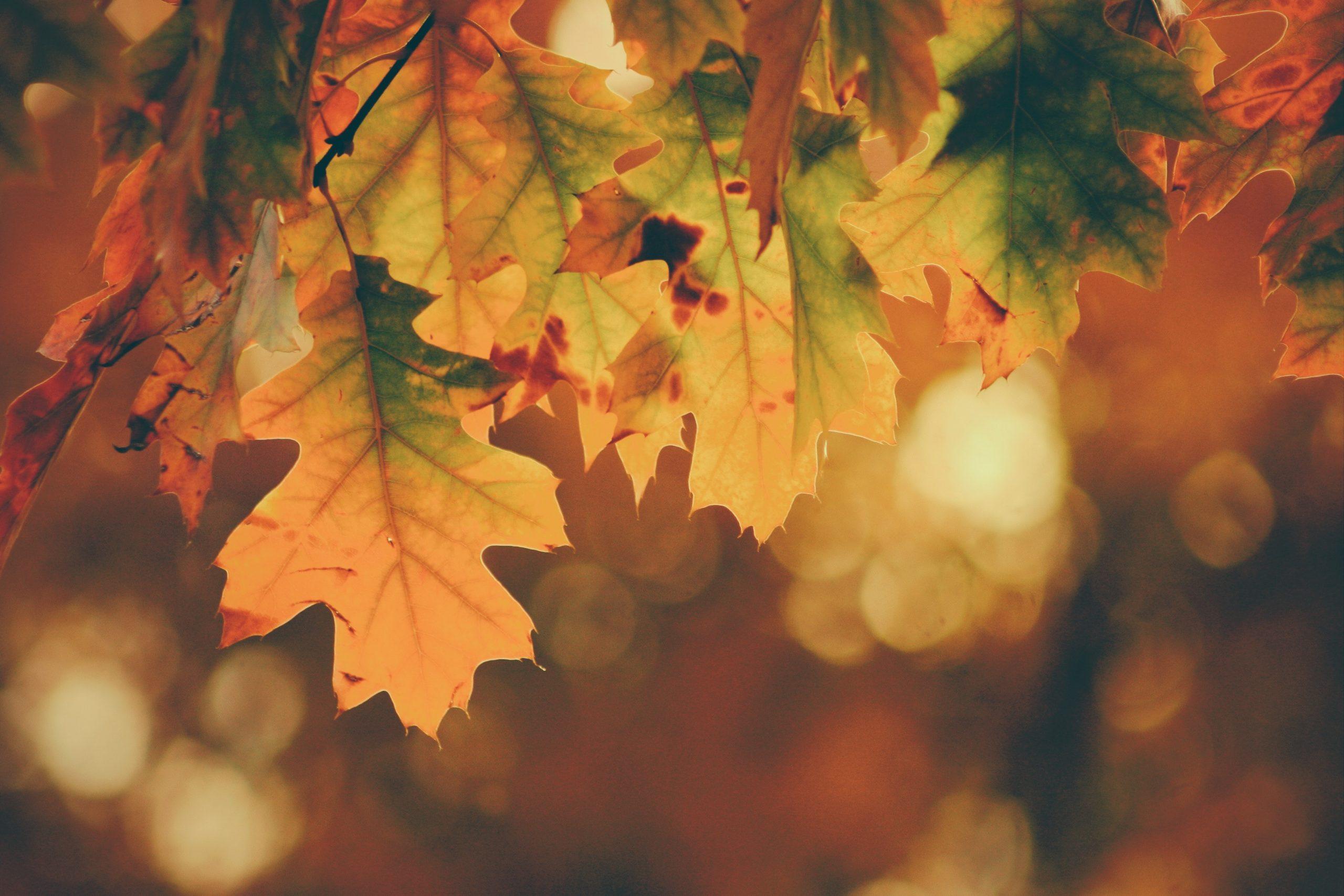 Equinozio di autunno 2020: cos'è e quando inizia davvero l'autunno