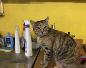 Il gattile di Alessandria ha riaperto: tanti gatti aspettano di avere una vera casa