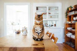 Non abbandonarmi!: ecco i consigli utili per migliorare il rapporto con cani e gatti