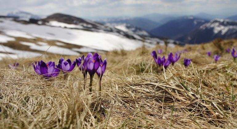 Immagine Nei prossimi giorni in Piemonte primo assaggio di primavera con temperature sopra i 20 gradi