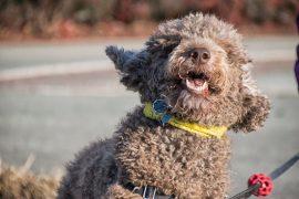 Scappa per inseguire un leprotto: cane recuperato dalla Stradale e consegnato al padrone