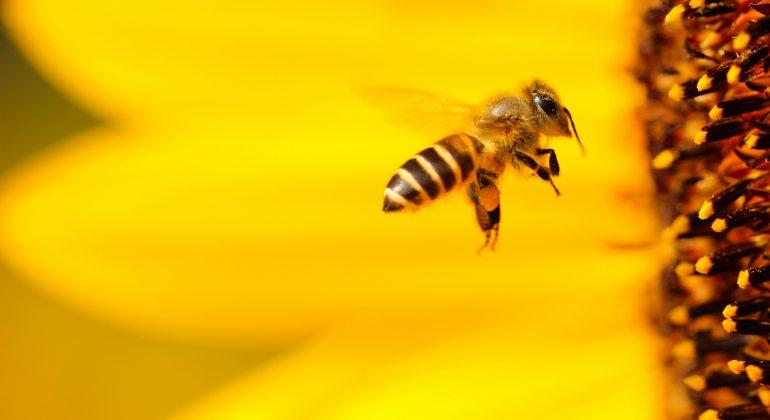 """""""Bee Free"""": il meraviglioso mondo delle api e il complesso rapporto con l'uomo"""
