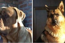 Due cani smarriti in zona Casalbagliano: ecco la richiesta di aiuto della loro padrona
