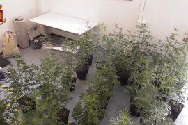 Una serra in casa con trenta piante di marjuana: un arresto e una denuncia ad Alessandria