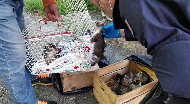 La Polizia Municipale di Alessandria salva nove gattini: erano stati abbandonati in una cassetta