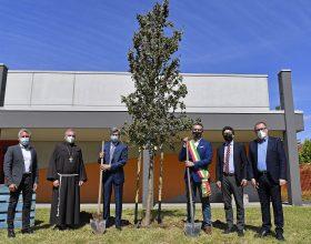 Derthona Basket e Riccoboni Holding pianteranno 34 nuovi alberi
