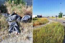 Dai marciapiedi invasi d'erba alla spazzatura nei fossi: storie di inciviltà in via Giordano Bruno