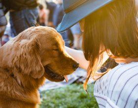 In Piemonte il dog sitter diventa una professione: la Regione approva una legge