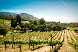 A spasso per l'Alessandrino: la bellezza della campagna lungo il sentiero Tortona-Volpedo