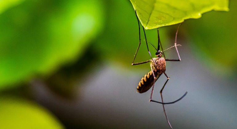 Anche nel 2021 il Comune di Alessandria dichiara guerra alle zanzare