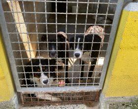 Rifugio Cascina Rosa: tanti cani attendono una nuova famiglia