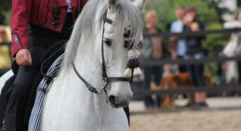 Festa Andalusa a Rivanazzano: paella, sangria e spettacoli equestri