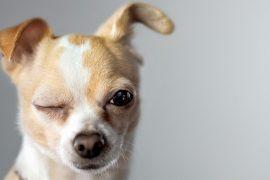 A Torino duemila cani e 100 mostre speciali di razza