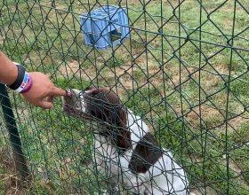 Non Abbandonarmi al canile di Nizza Monferrato: da 19 anni in prima linea per il benessere animale