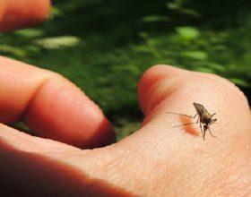 Valenza protagonista a Estate in diretta su RaiUno per la lotta alle zanzare