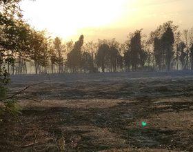 La devastazione del fuoco dopo l'incendio tra Torre Garofoli e Tortona