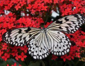 Il Giardino delle Farfalle, anima e cornice del Castello di Valverde