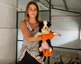 Cani dolcissimi che aspettano solo carezze in una nuova famiglia
