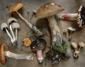 I consigli degli esperti dell'Asl per evitare rischi quando si raccolgono funghi